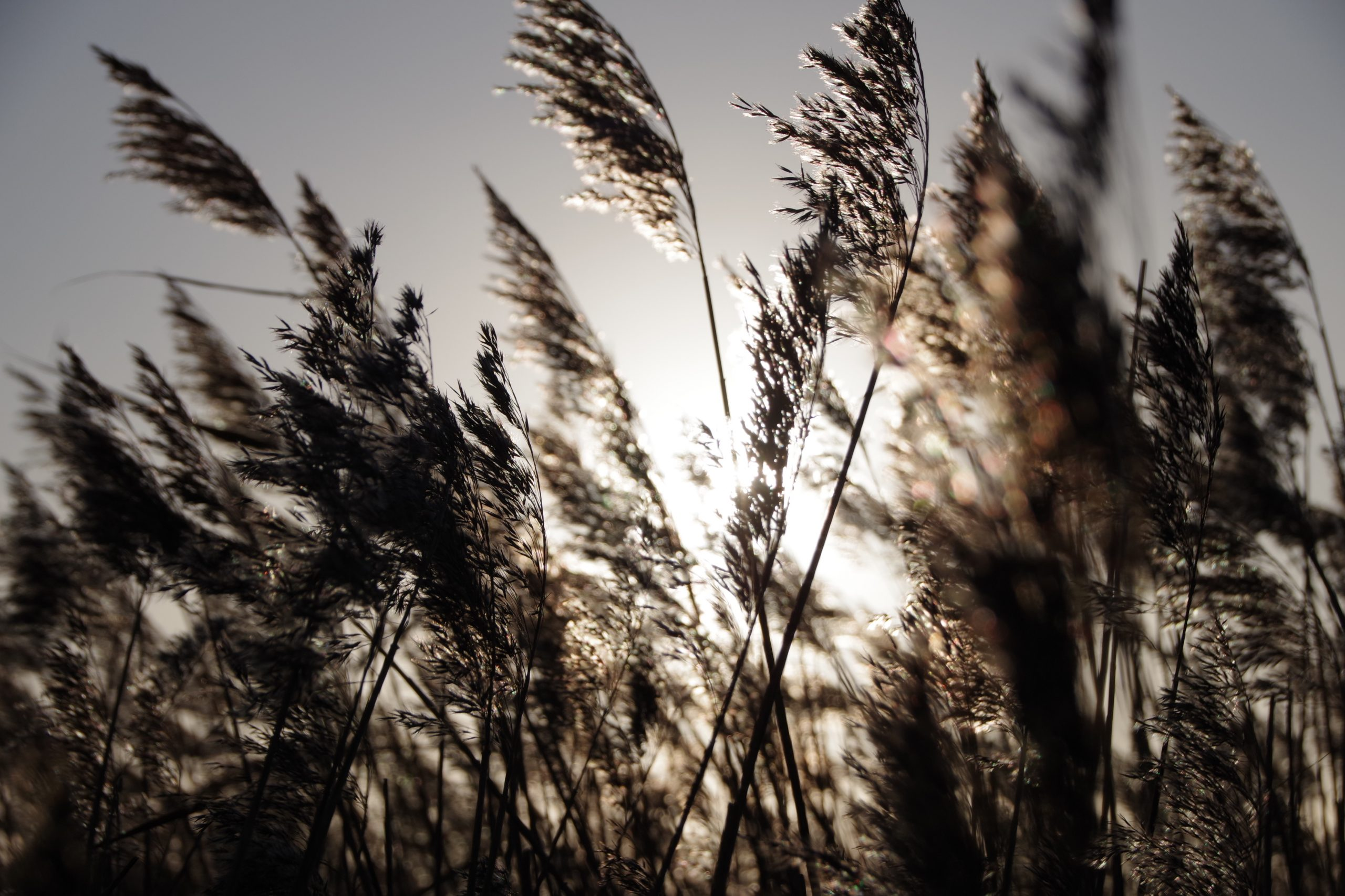 Lines, reeds and rushes