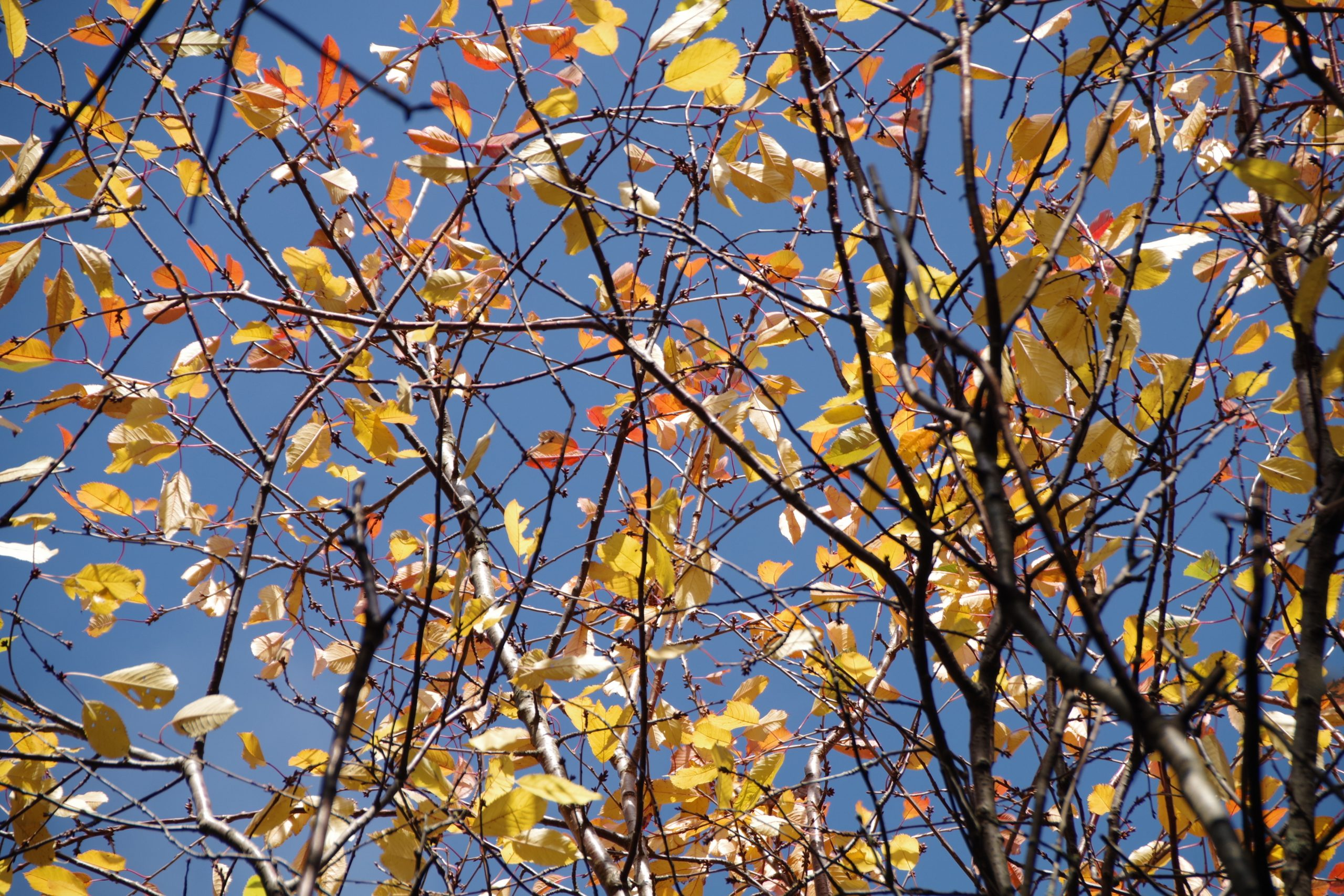 Blue sky and faded leaves