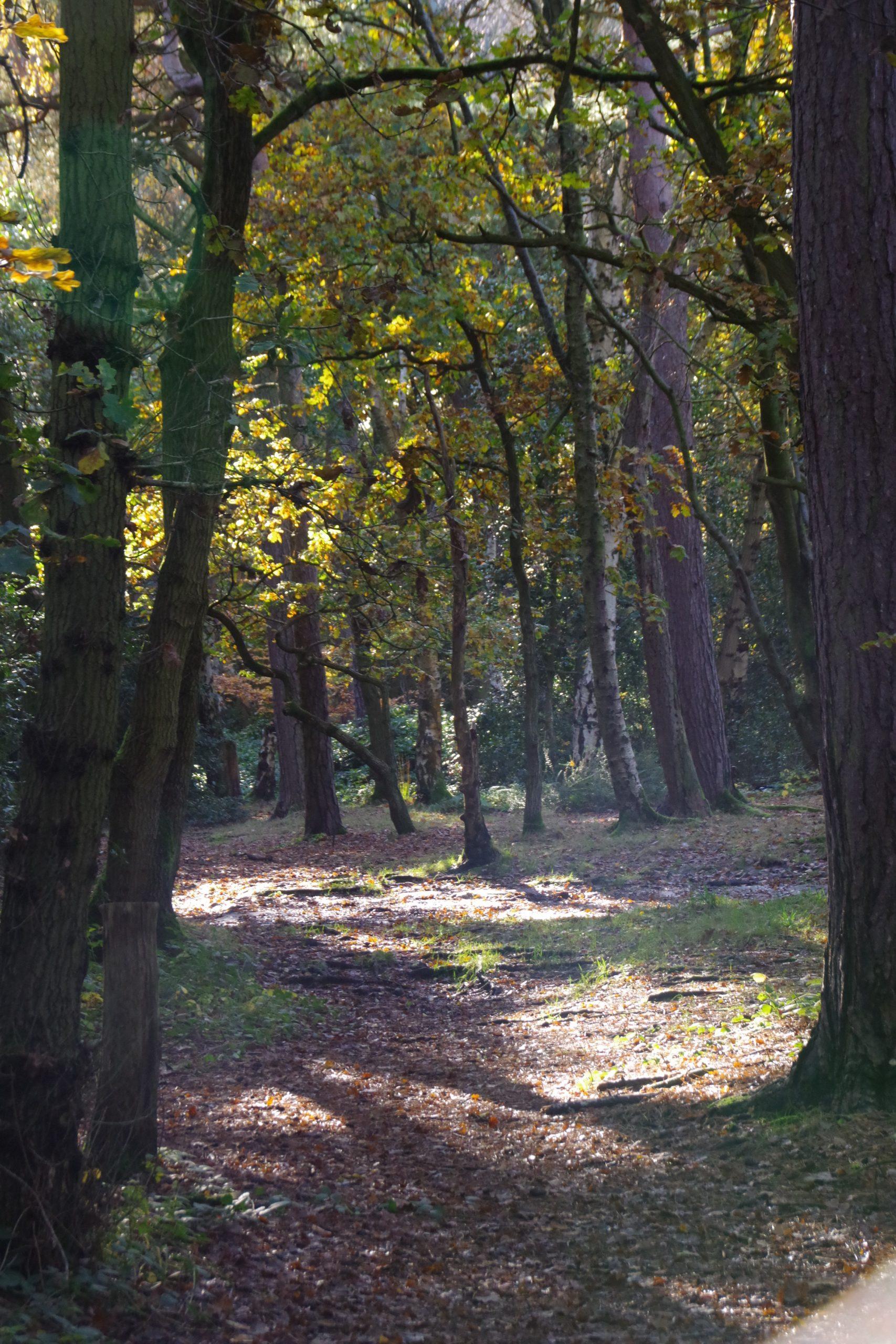 Bidston woodland