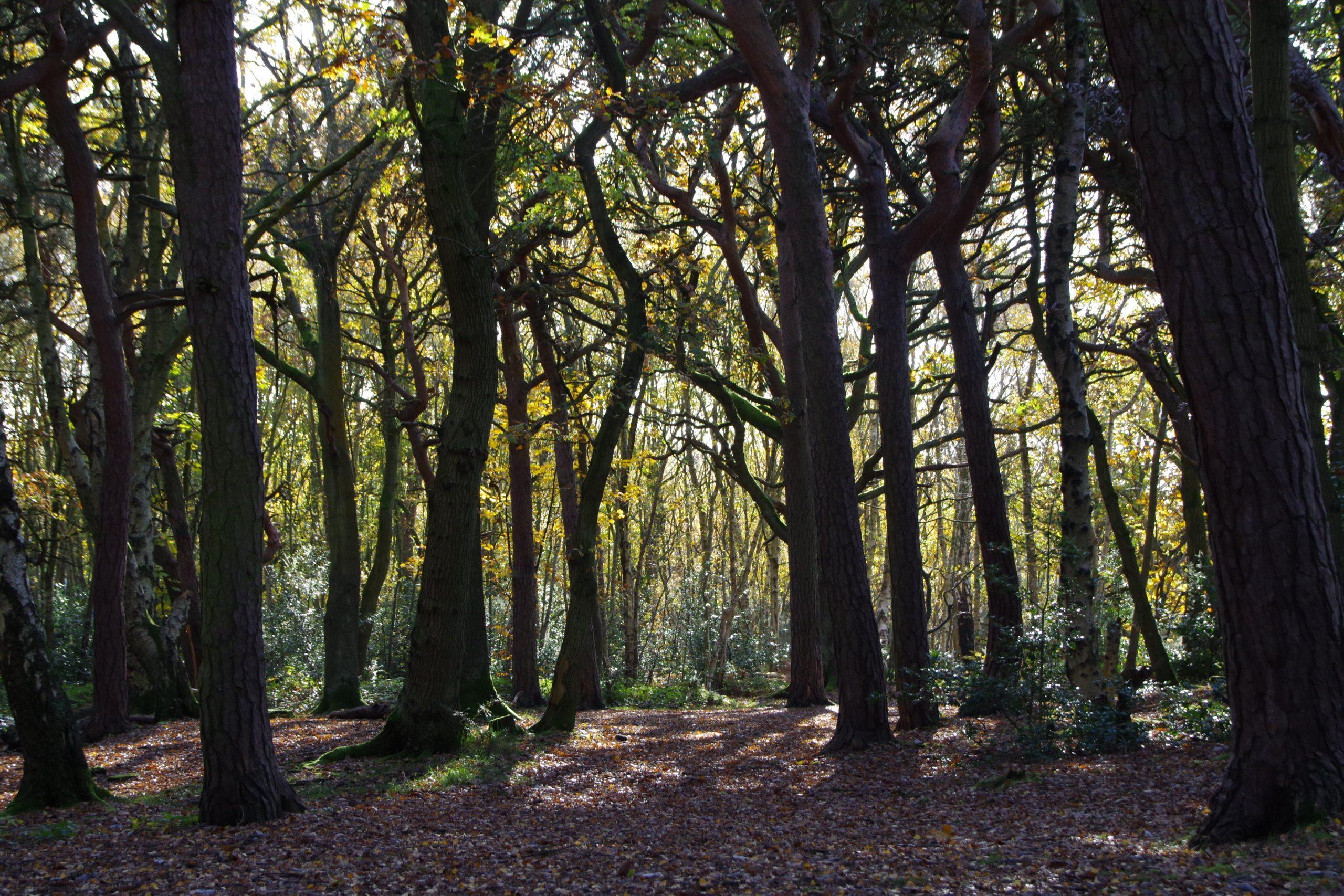 Autumn in Bidston