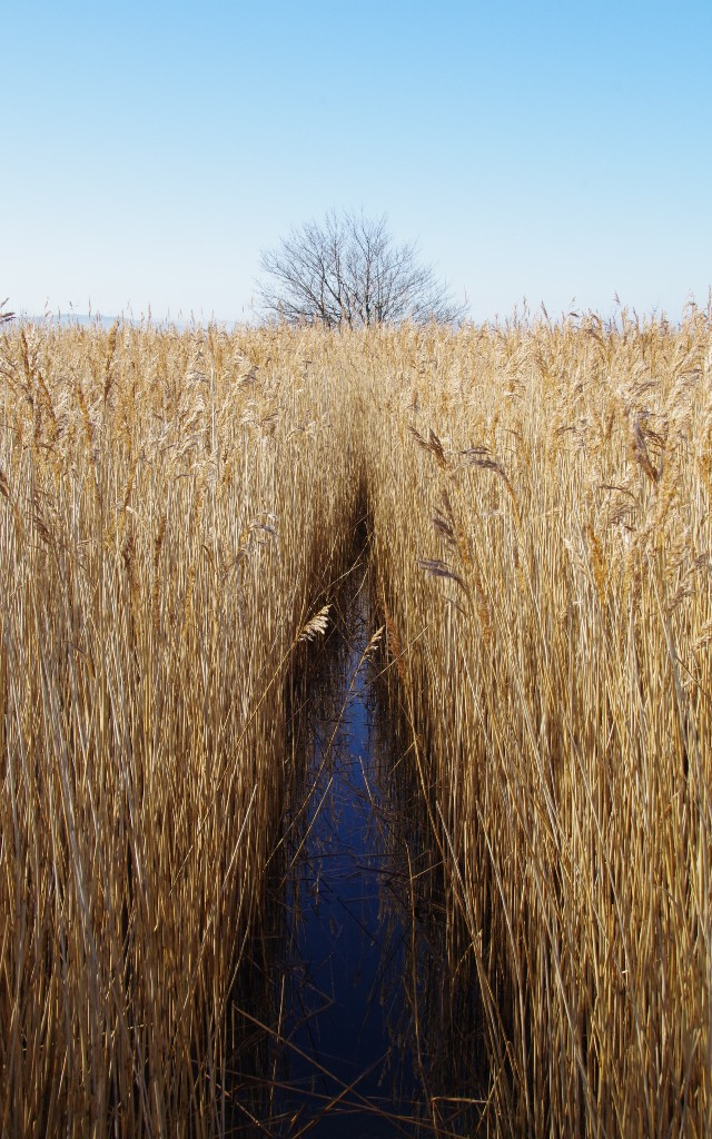 A way through the Reeds