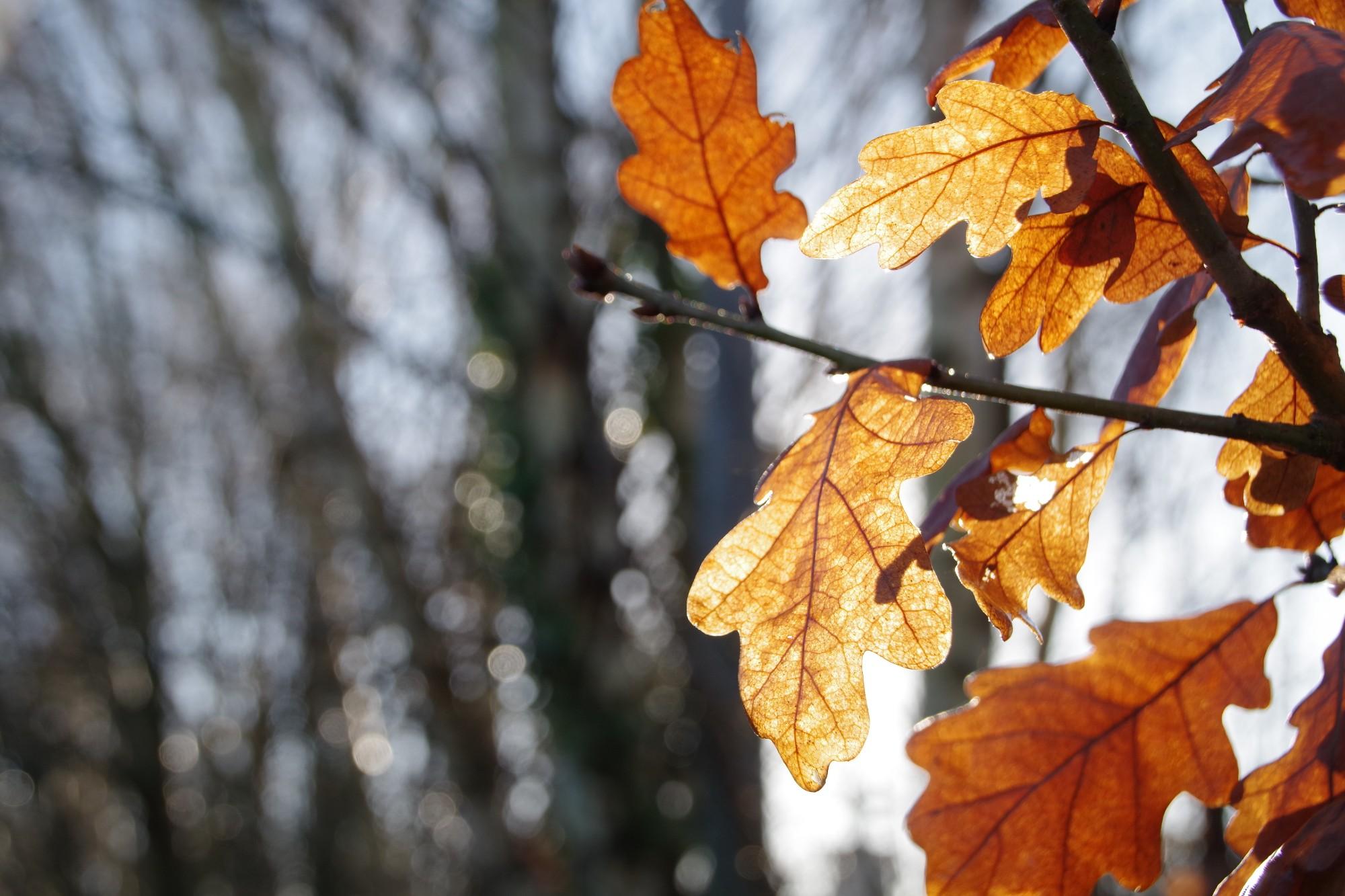 Autumn Leaves Dibbinsdale