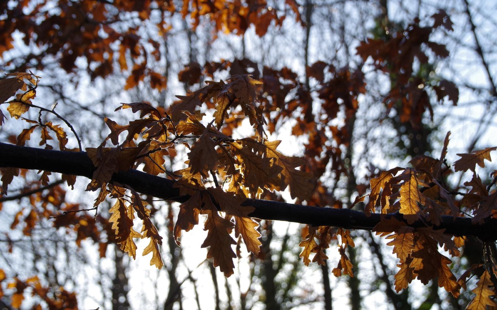 Autumn Leaves in Dibbinsdale