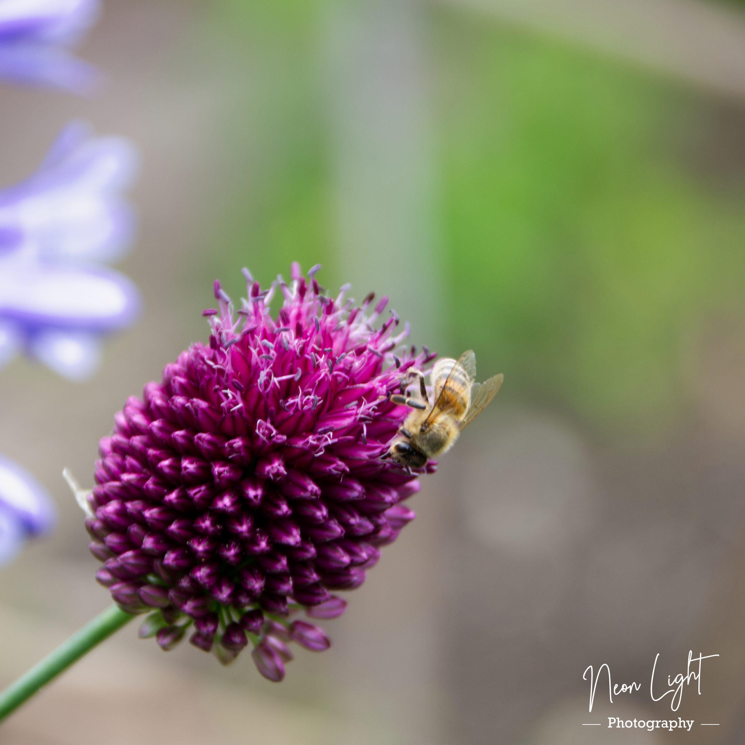 2020-07-21-IMGP2746-Bee-Happy-flower