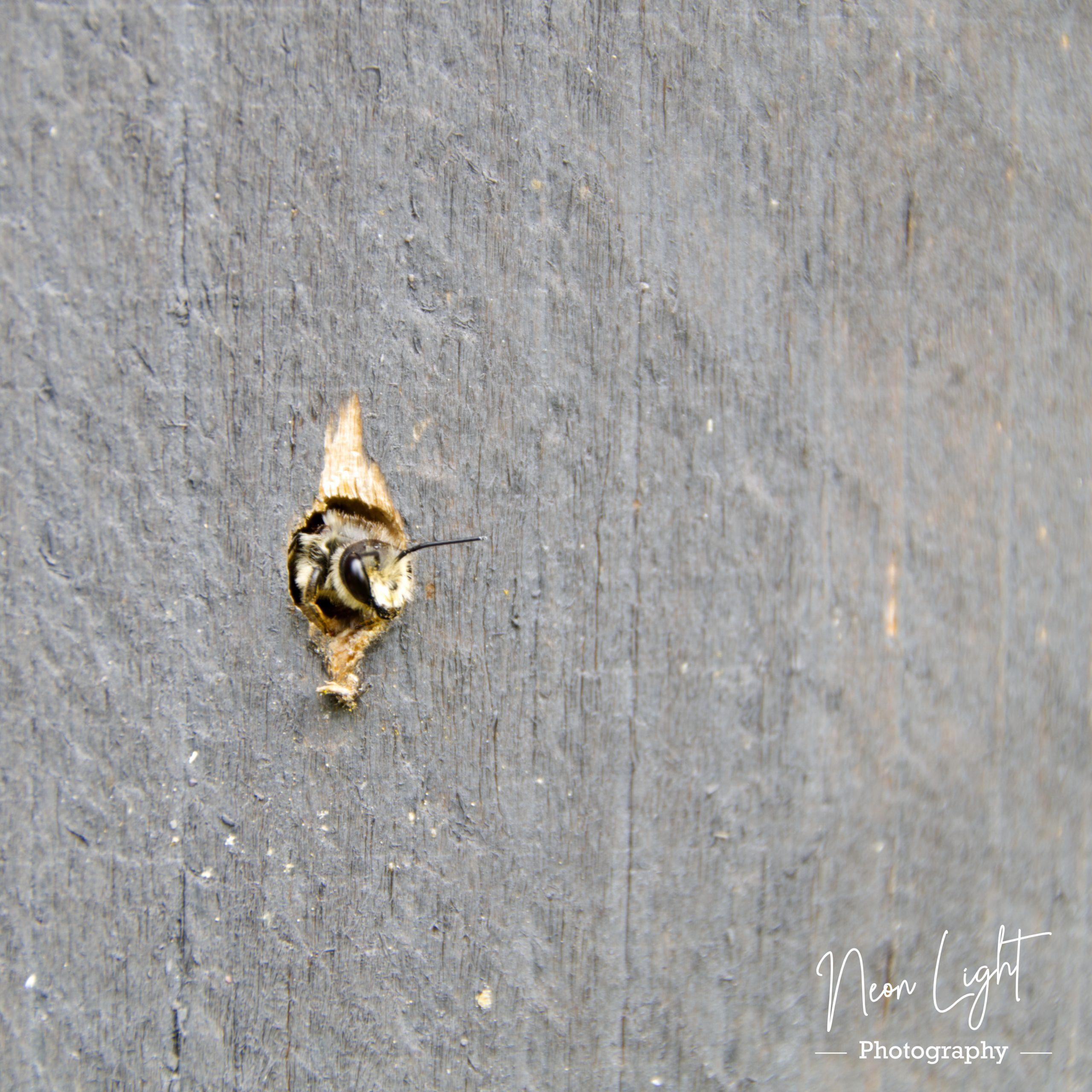 2020-07-21-IMGP2746-Bee-Happy