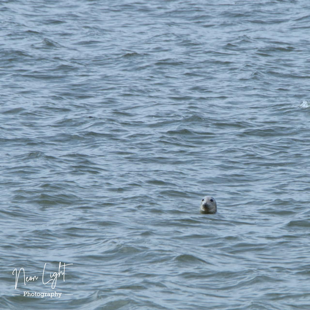 2020-07-24-IMGP3080-Seal