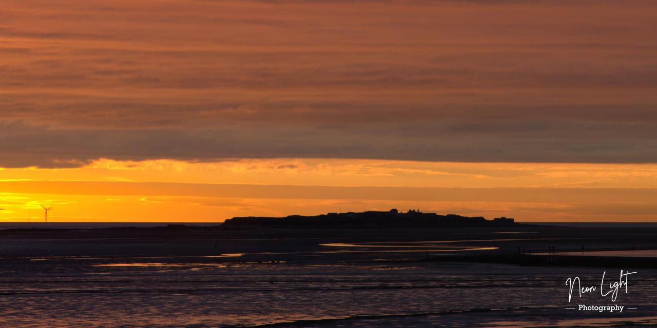 Hilbre Island Golden Glow