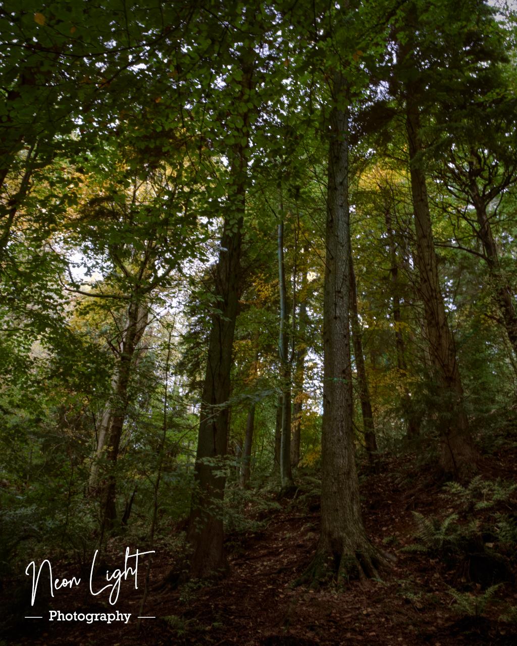 Nant Mill Woodland Walk