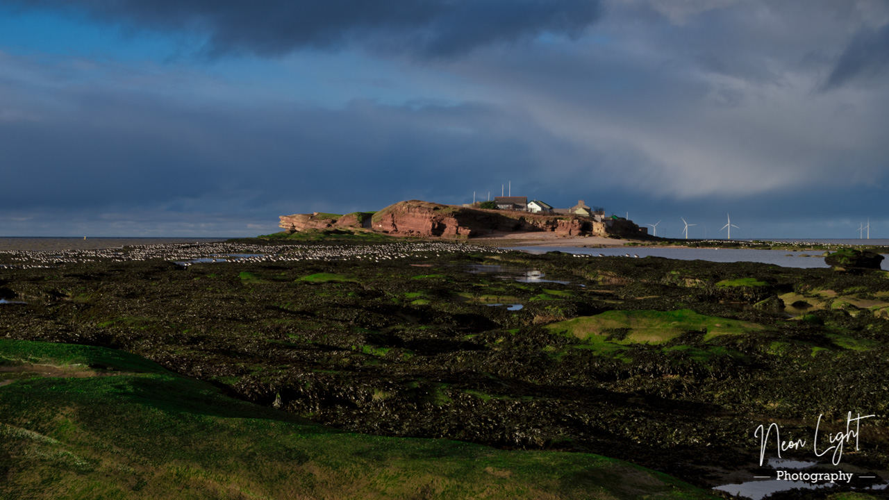 A Winters Rest on Hilbre