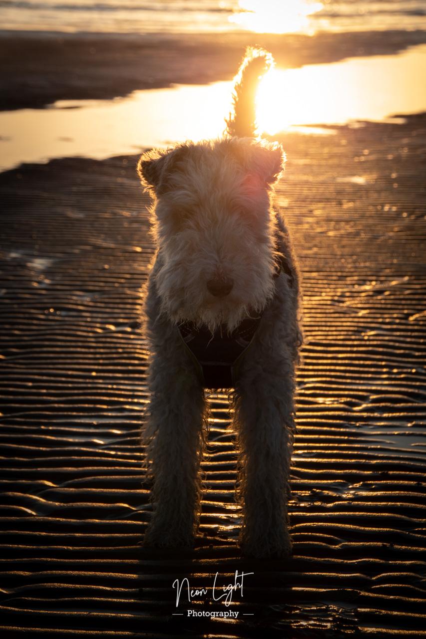 Bertie on the Beach