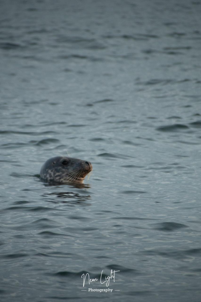 Seal says hello