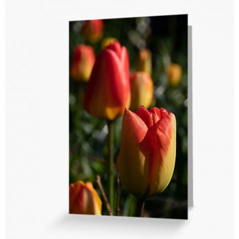 Floral Greetings Cards