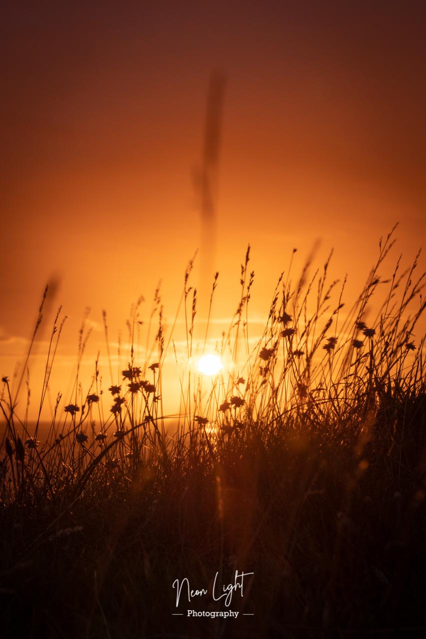 Hilbre Grasses